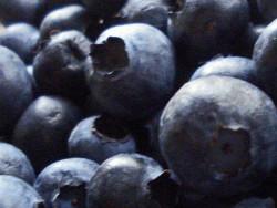 A Beginner's Guide To Antioxidants